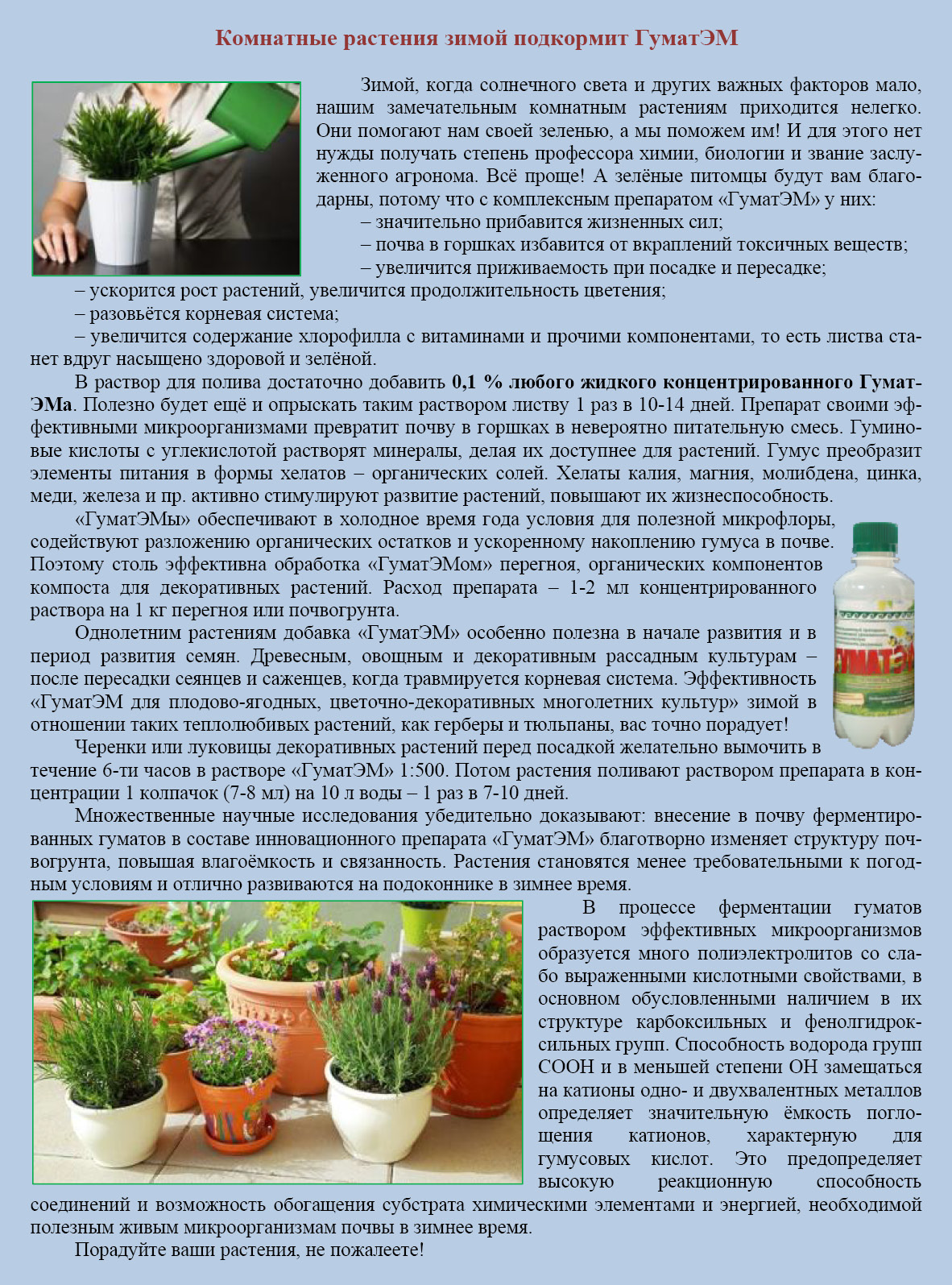 Как подкармливать домашние цветы в домашних условиях 126